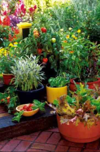 The Best Soil For Container Gardens